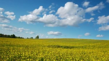 Glade of dandelions on springtime — Stock Video