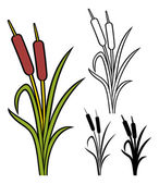 Autumn Reeds — Stock Vector