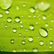 Close up of green leaf with water drops — Stock Photo #55273985