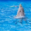 Dolphin playing in water park, performance, show — Stock Photo #55275025