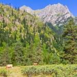 Beautiful view of alpine meadows. Upper Svaneti, Georgia, Europe — Stock Photo #55276437