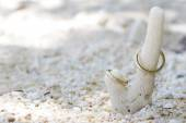 Wedding rings on a coral on sand tropical beach — Stock Photo