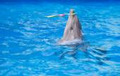 Dolphin playing in water park, performance, show — Stock Photo