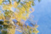 Autumn trees reflection in water — Stock Photo