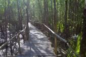 Mangrove forest, wooden bridge — Stock Photo