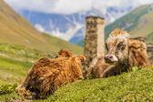 Ushguli, Upper Svaneti, Georgia, Europe. Caucasus mountains. — Stok fotoğraf