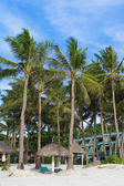 Tropical beach with blue sky and palm trees — Stock Photo