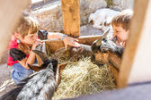 Two kids - boy and girl - taking care of domestic animals on far — Stock Photo