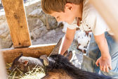 Young boy taking care of domestic animals on a farm — Stock Photo