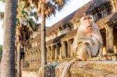 Monkey portrait, angkor wat, cambodia, in background — Foto de Stock