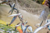 Fishing net with fish on natural background — Foto Stock