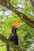 Hornbill bird on green natural background — Stock Photo