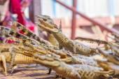 Small dead crocodiles in souvenir shop, siem reap cambodia — Stock Photo