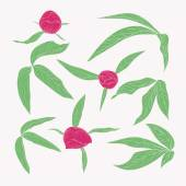 Set of beautiful peony leaves and buds in vintage colors isolated on white. — Stock Vector