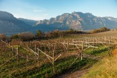Vineyards of Trentino, Italy — Stock Photo