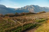 Vineyards of Trentino, Italy — Zdjęcie stockowe