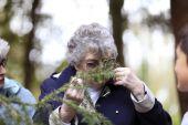 Elderly lady smells the pine needles — Stock Photo