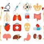 Stock vector medicine anatomy flat icon set — Stock Vector #55930085