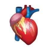 Vector heart illustration — Stock Vector