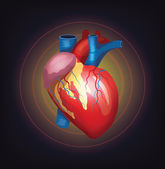 Vector realistic heart illustration — Stock Vector