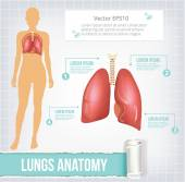 Vector lungs infographics banner illustration — Stock Vector