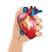 Hand holds heart. Vector illustration — Stock Vector