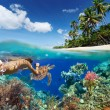 Young woman snorkeling over coral reef in tropical sea. — Stock Photo #65350263