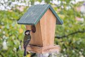 Birds Titmouse — Stock Photo