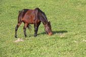 Cavalo num prado — Fotografia Stock