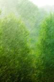 Rainy outside window green background texture. — Stock Photo