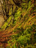 Autumn Pathway. Landscape with the autumnal forest. — Stock Photo