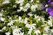 White flowers in the garden shined at sun — Stock Photo