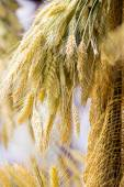 Bunch or sheaf of wheat ears hanging outdoor — Stock Photo
