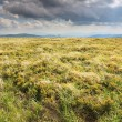 Nature. Field mountain landscape in the summer — Stock Photo #53007409