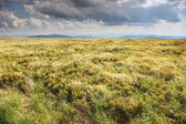 Nature. Field mountain landscape in the summer — Stock Photo