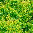 Closeup of green leaves tree outdoor. Nature background. — Stock Photo #53951829
