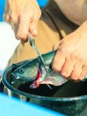 Man cleaning fish outdoor — Stock Photo