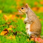 scoiattolo nel parco d'autunno — Foto Stock #55330801