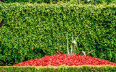 Flowerbed of red flowers and bush — Photo