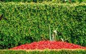 Flowerbed of red flowers and bush — Foto de Stock
