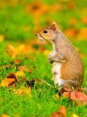 Wiewiórki w parku jesień — Zdjęcie stockowe