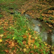 Creek im Herbst Wald — Stockvideo #55452981