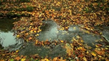 Sparkling water streaming over rocks with wet colorful autumn leaves. — Vídeo Stock