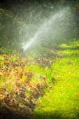 Lawn sprinkler spraying water over grass — Foto Stock