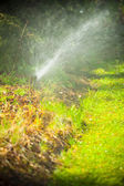 Lawn sprinkler spraying water over grass — Stok fotoğraf
