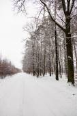 Snow road in winter forest. — Stock Photo