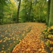 Beautiful autumn trees in park — Stock Video #55633227