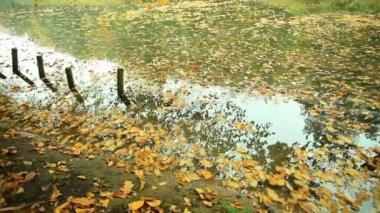 Pond in park with golden leaves — Stock Video