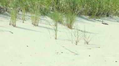 Grass on sandy beach — Stock Video