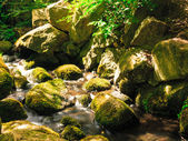 Stream  and stones in forest — Stock Photo